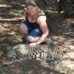 Cheetah Experience in Bloemfontein