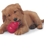dog_puppy_toy_1449_5257Y