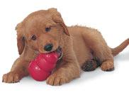 dog_puppy_toy_1449_5257Y