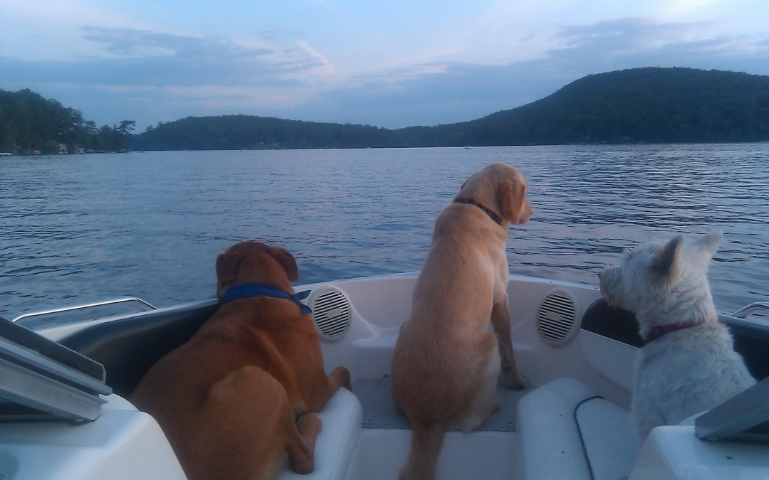 Pet and Boat Safety