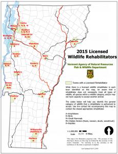 wildlife rehab 1