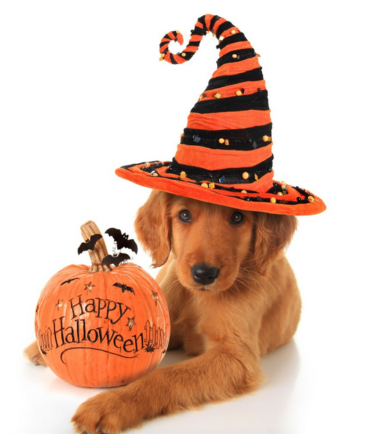 7 Things You Can Do to Make Halloween Safer for Your Pet