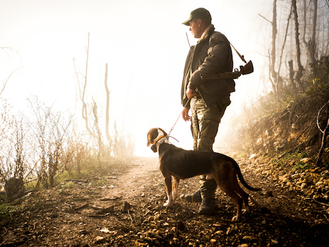 Gun Safety and Pets